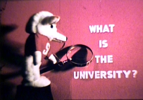 What is the University