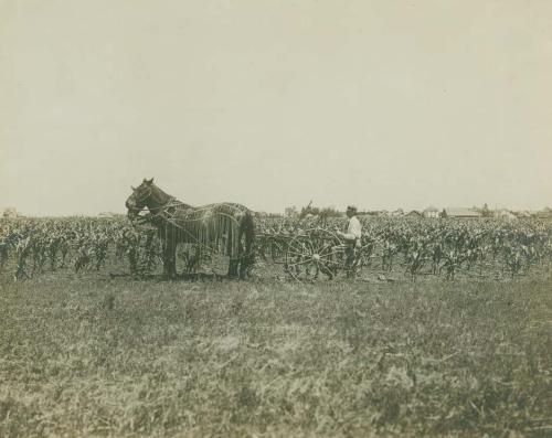 Parmley-crop