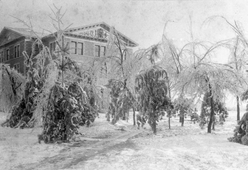 old-main-trees